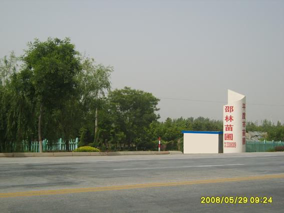 山东省青岛邵林苗圃
